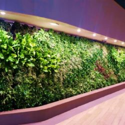 Example of Office Garden Walls in Trendy Office Space