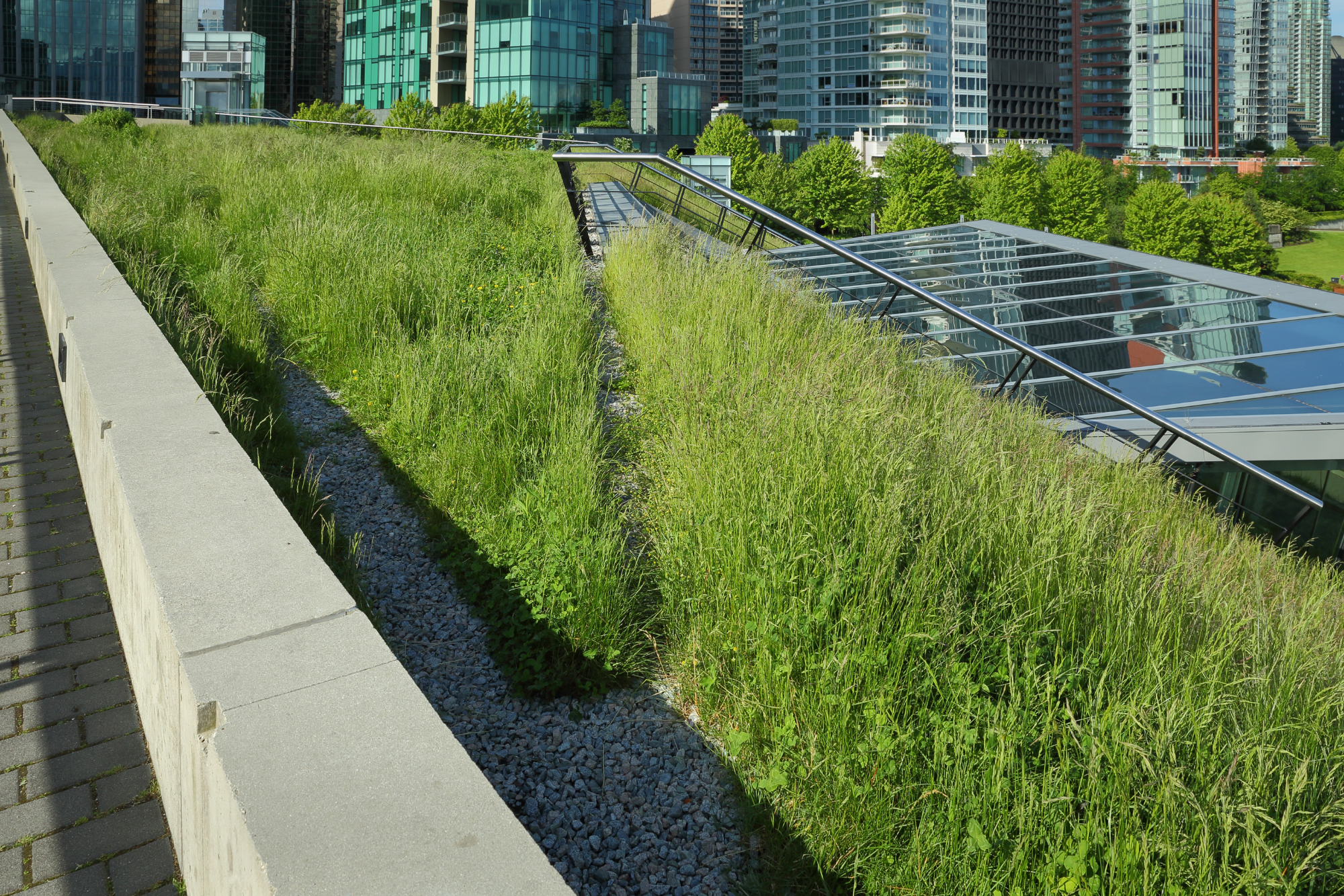 Green Roof On An Urban Commercial Building